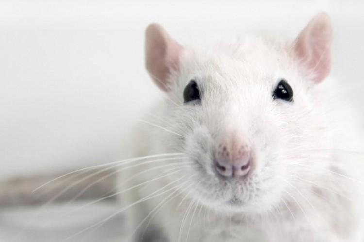 VII Curso sobre uso y manejo de animales de Laboratorio