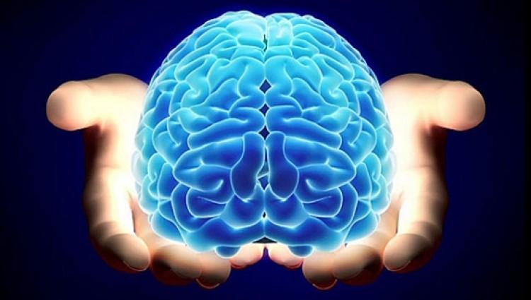 II Ciclo de Jornadas del Departamento de Neurociencias