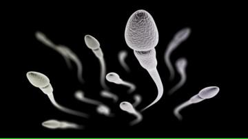 Charla: importancia de la regulación del pH para la fisiología del espermatozoide