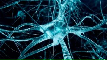 Becas para la cuarta Escuela Latinoamericana de Neuroquímica Avanzada del ISN