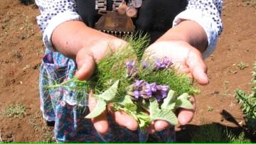 """Conferencia """"Las plantas como medicina: aportes desde la Etnobotánica"""""""