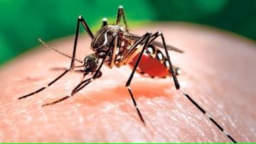 Zika y Dengue, actualización y protocolo de actuación