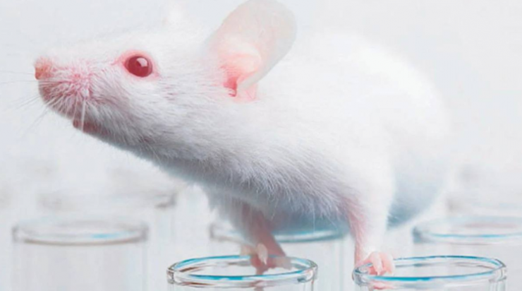 imagen que ilustra noticia Capacitamos en el empleo de animales para experimentación