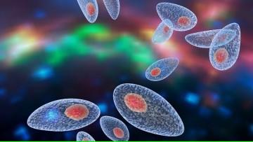 Organizamos una Jornada de Actualización en Toxoplasmosis
